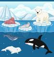 cartoon wild arctic animal on north pole vector image vector image