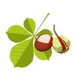 Chestnut isolated on white background Vinous vector image