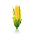 object corn vector image