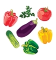 Set of vegetables on a white background vector image