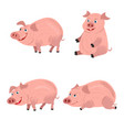 cute smiling pigs playing in mud farm vector image vector image
