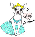 girl chihuahua cute vector image