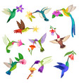 hummingbird tropical humming bird character vector image