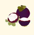Mangosteen fruit vector image
