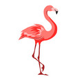 pink flamingo tropical exotic vector image