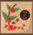premium coffee beans tree vector image