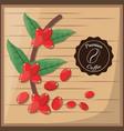 premium coffee beans tree vector image vector image