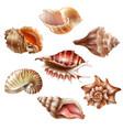 realistic seashell set vector image vector image