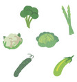 vegetables set on a white background vector image