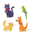 cats dog and parrot vector image
