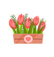 cute pink tulips with green leaves in wooden box vector image vector image