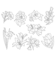Flower Collection Hand Drawn vector image