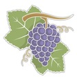 lilac grapes vector image vector image