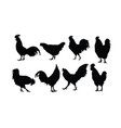 rooster and chicken activity vector image