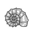 sea shell scallop vector image vector image