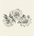 vintage anemone set hand drawn vector image vector image