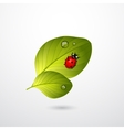 Two green leaves with red lady bug vector image