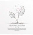 young plant form low poly wire frame on white vector image vector image