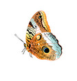 beautiful patterned butterfly isolated vector image