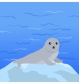 Earless seal in Flat Design vector image vector image