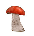 mushroom with red cap vector image vector image