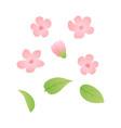 set spring blossom flowers background vector image