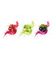 splash juice cranberry gooseberry black currant vector image vector image