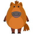 brown horse on white background vector image vector image