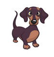 cartoon of dachshund