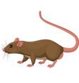 cartoon rat on white background
