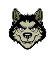 head angry werewolf on vector image vector image