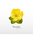 Yellow cherry flower with leaves and ladybug Logo vector image vector image