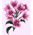 Bouquet of Fuschia Colored Flowers vector image