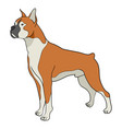 cartoon of boxer dog vector image vector image
