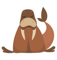 cartoon walrus a walrus vector image