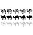 set of camels vector image vector image