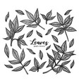 a set of graphic peony leaves detailed vector image