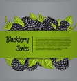 blackberry series banner with juicy berry vector image vector image