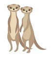 cartoon meerkats meerkat vector image vector image