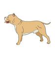 cartoon of pit bull dog vector image