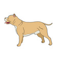 cartoon pit bull dog vector image