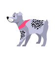 cute grey dog with black spots vector image vector image