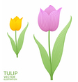 Purple tulip Yellow tulip vector image vector image