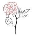 Red Rose isolated on white vector image vector image