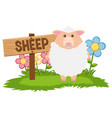 white sheep in the farm vector image vector image