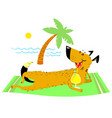 dog resting on the beach on vector image vector image