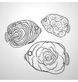 Ornamental graphic fish vector image