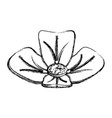 spa flower isolated vector image vector image