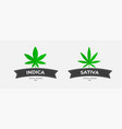 graphic logo template with grass organic thc and vector image vector image