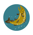 spotted trout fish jumping vector image vector image